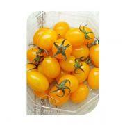 Sementes de Tomate Sicília (Híbrido) Isla Pro