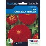 Sementes de Zínia Flor de Dália Vermelha 5g - Topseed Blue Line