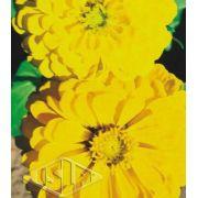 Sementes de Zinnia Gigante da Califórnia Amarela 300mg - Isla Multi