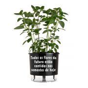 Vaso Autoirrigável Médio N03 Raiz Preto Linha Frases 16cm x 14cm Flores do Futuro