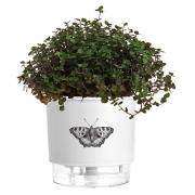 Vaso Autoirrigável Pequeno N02 12cm x 11cm Branco Borboleta Coleção Jardim de Insetos