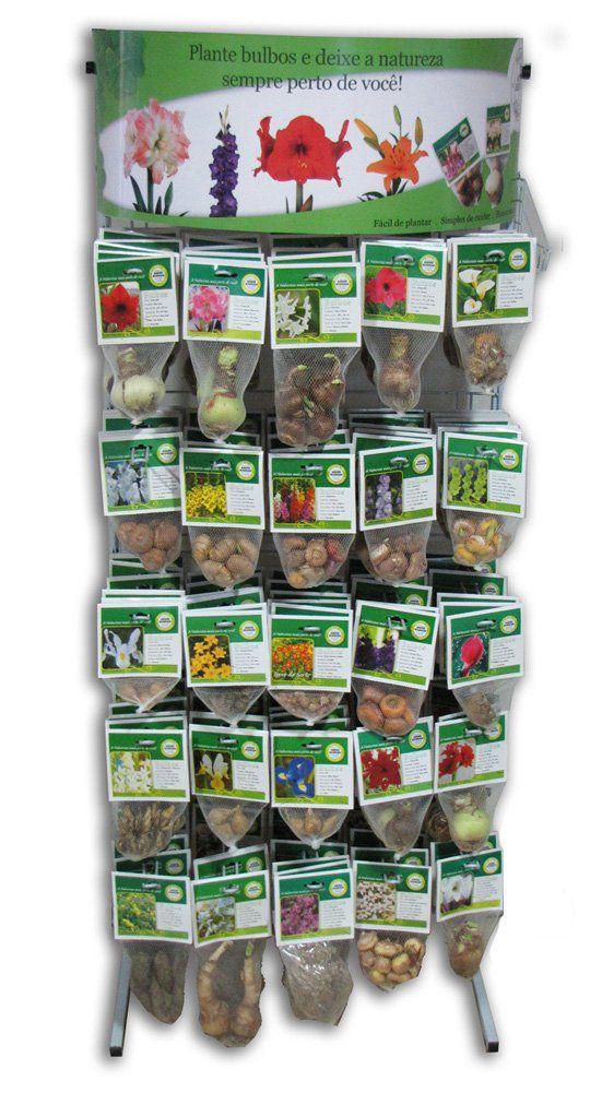 Trevo Quatro Folhas Oxallis - cartela com 20 bulbos