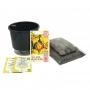 Kit Completo Inicial: Meu Primeiro Plantio de Tagete com Vaso Preto + Manual de plantio