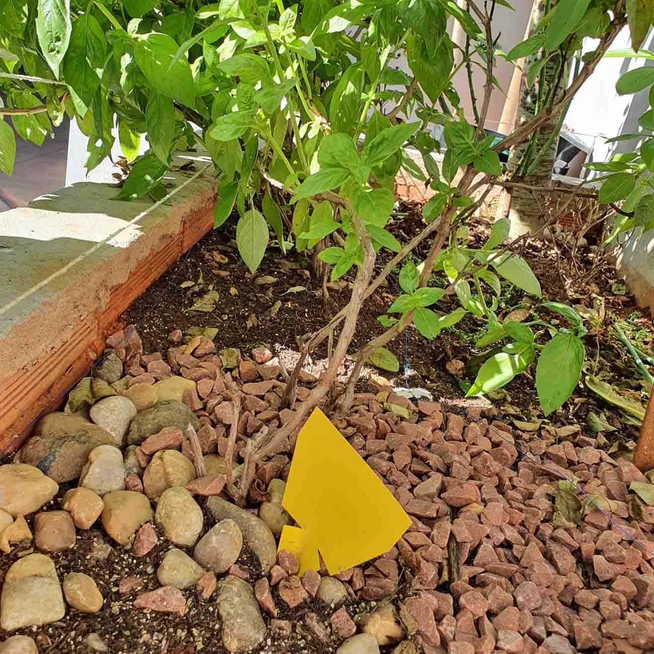 Armadilha Amarela - Pequena