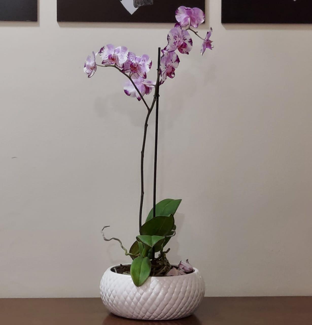 Cachepô de Cerâmica Branco Botanicals Boca Larga Pequeno 9,5cm x 21cm - 5715