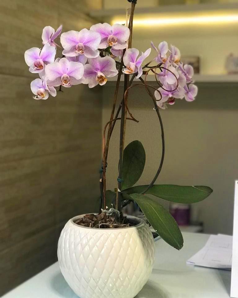 Cachepô de Cerâmica Branco Botanicals Pequeno 13,5cm x 14cm - 5718