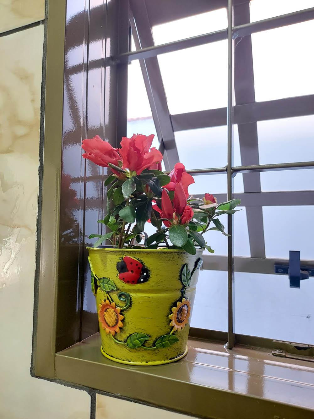 Cachepô de Lata Decorativo 11cm x 12,5cm Verde