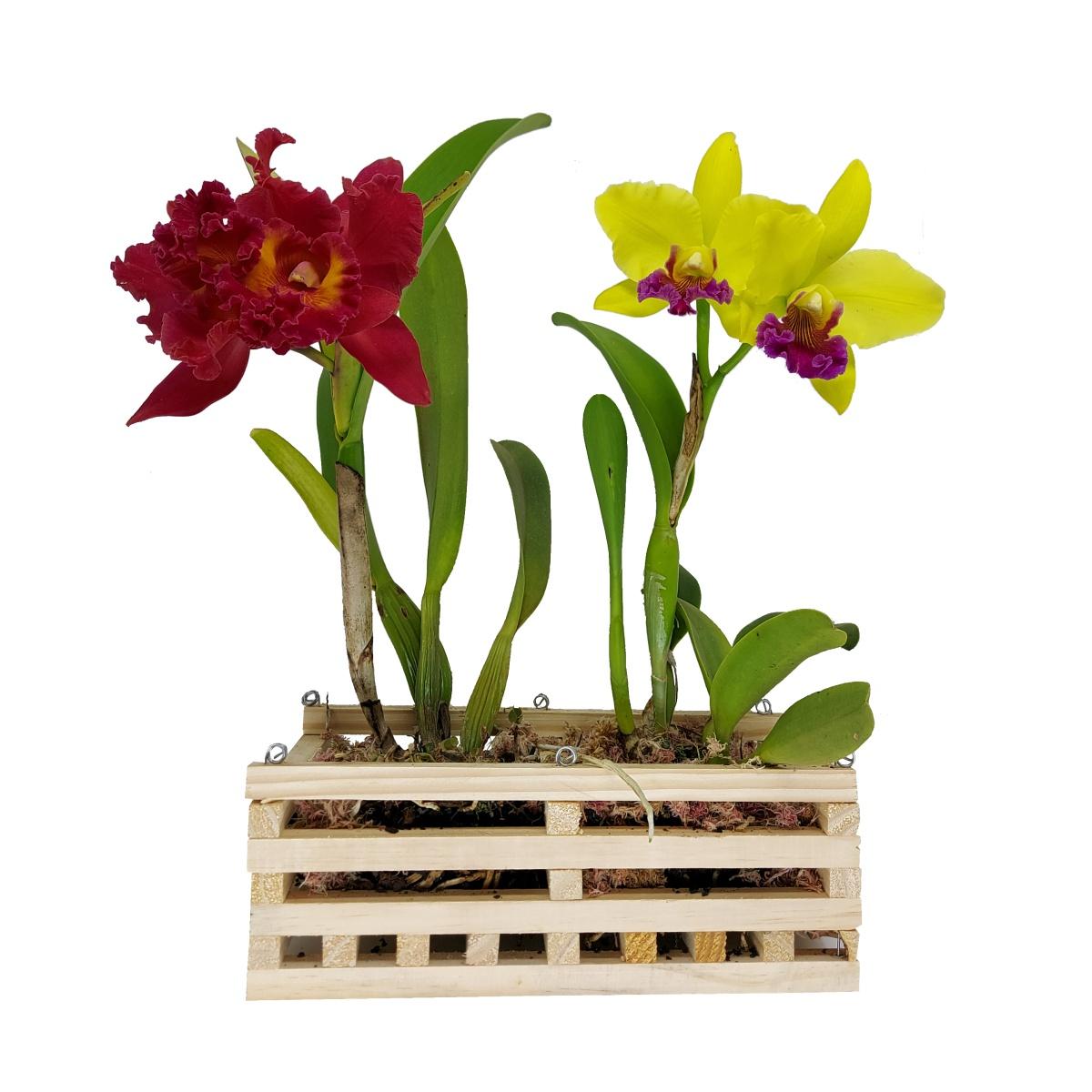 Cachepô Duplo para Orquídeas Retangular 30cm x 13cm em Madeira de Pinus