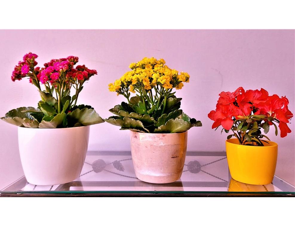 Cachepô Elegance Redondo 01 Amarelo - 9,0 altura x 11,0 largura
