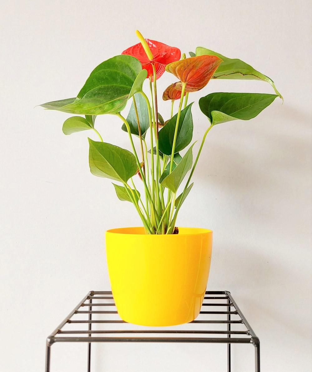 Cachepô Elegance Redondo 03 Amarelo - 11,2 altura x 14,7 largura