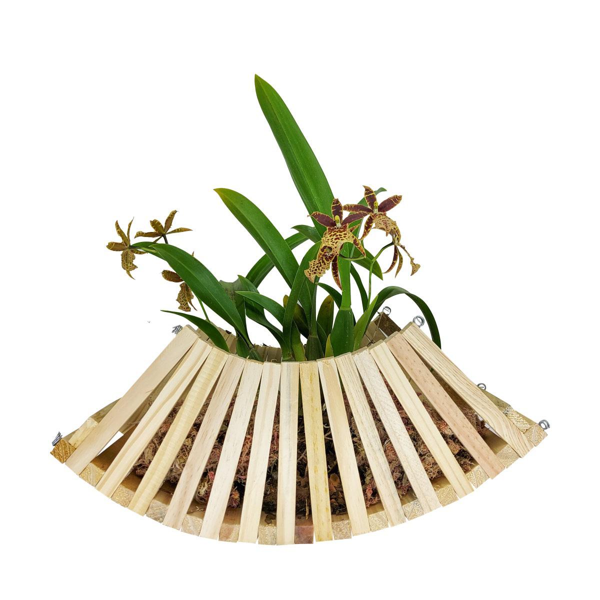 Cachepô para Orquídea Modelo Cesta 40cm x 15cm em Madeira de Pinus