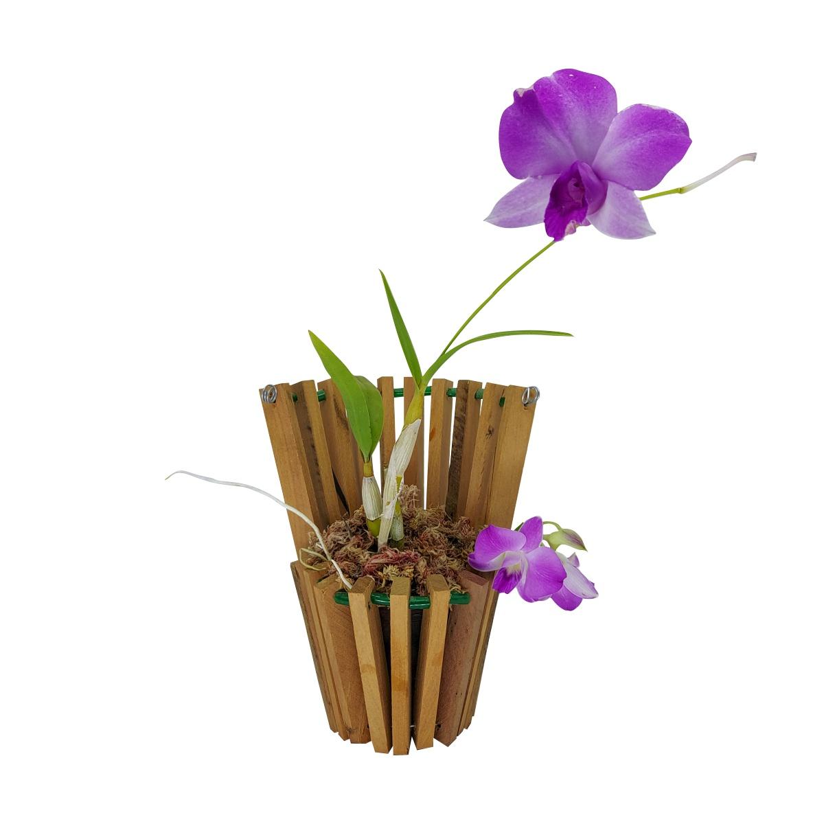 Cachepô para Orquídea Modelo Leque Fechado 15cm x 9,5cm em Madeira de Demolição