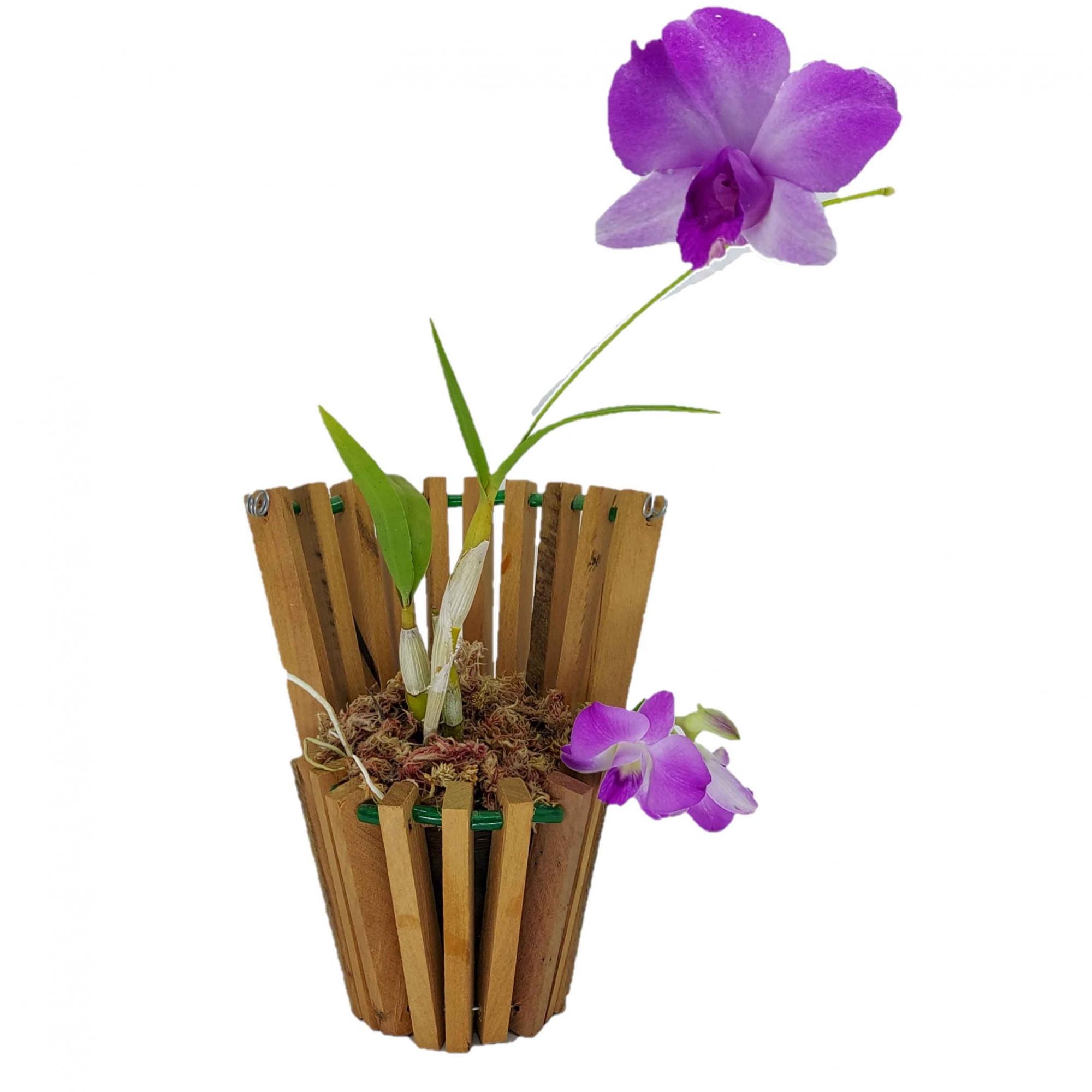 Cachepô para Orquídea Modelo Leque Fechado 20cm x 9,5cm em Madeira de Demolição