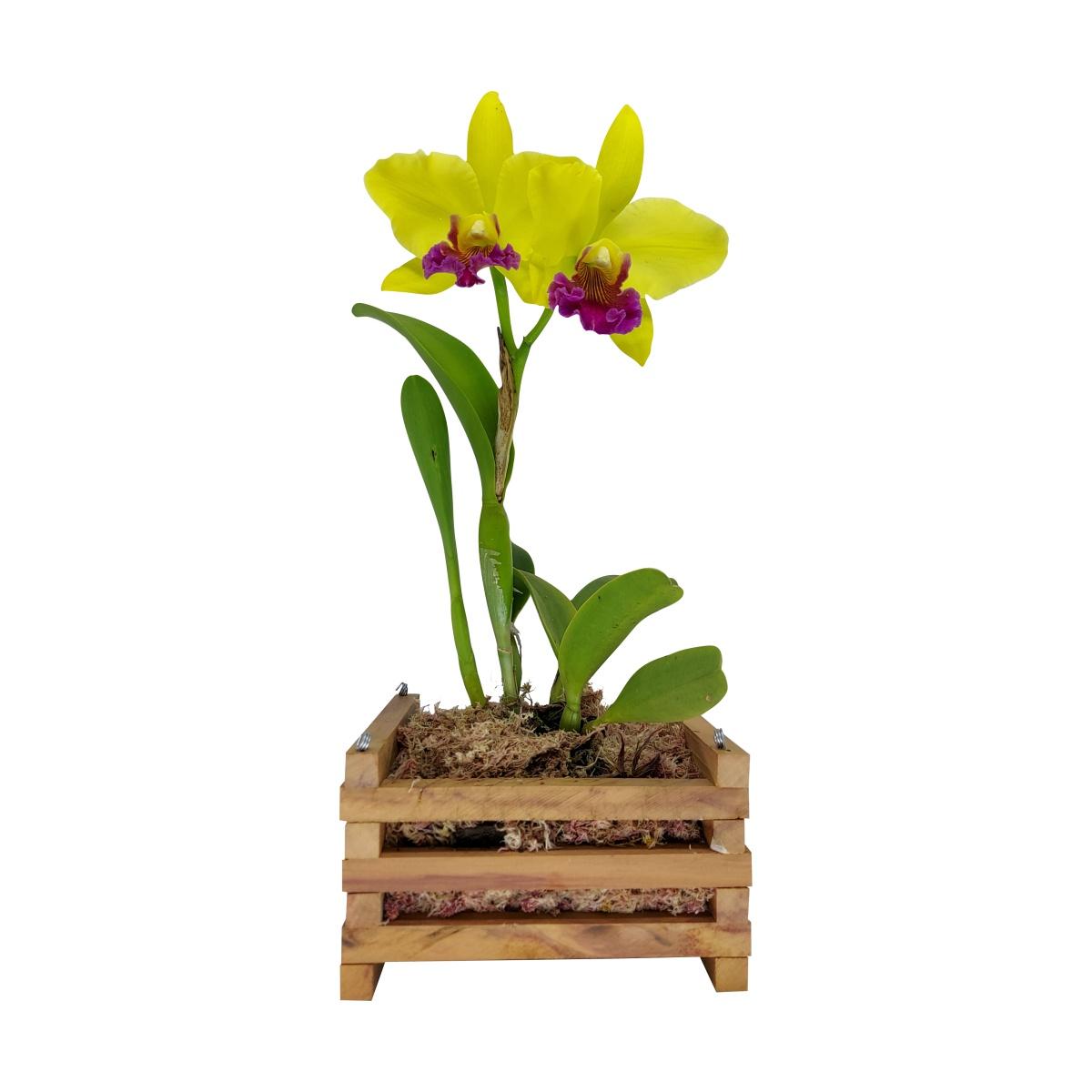 Cachepô para Orquídea Quadrado 11cm x 20cm em Madeira Peroba de Demolição