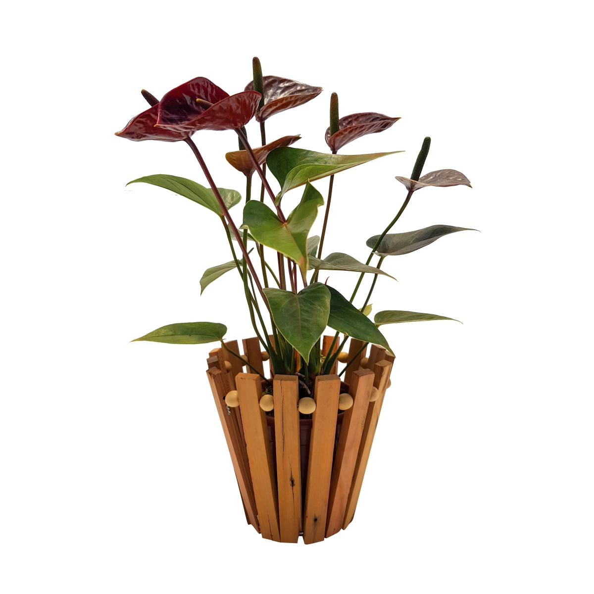 Cachepô para Orquídea Redondo 16cm x 15cm em madeira Peróba