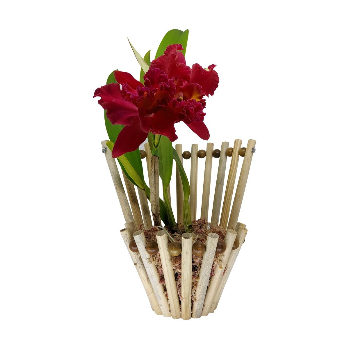 Cachepô para Orquídeas Cesto decorado 25,5cm x 27,5cm em Madeira Pinus
