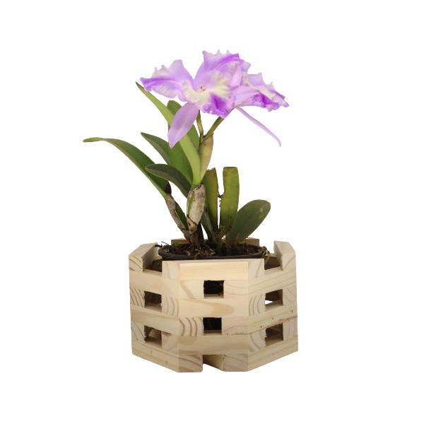 Cachepô para Orquídeas Octogonal em Madeira Pinus 12cm x 20cm