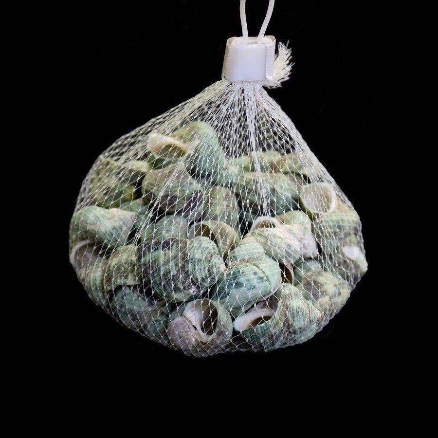 Conchinhas Verdes decorativas 150g