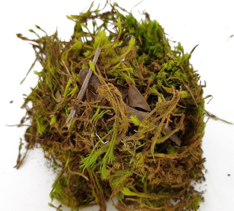 Esfagno Musgo Verde para Orquídeas e Plantas Carnívoras 1 litro