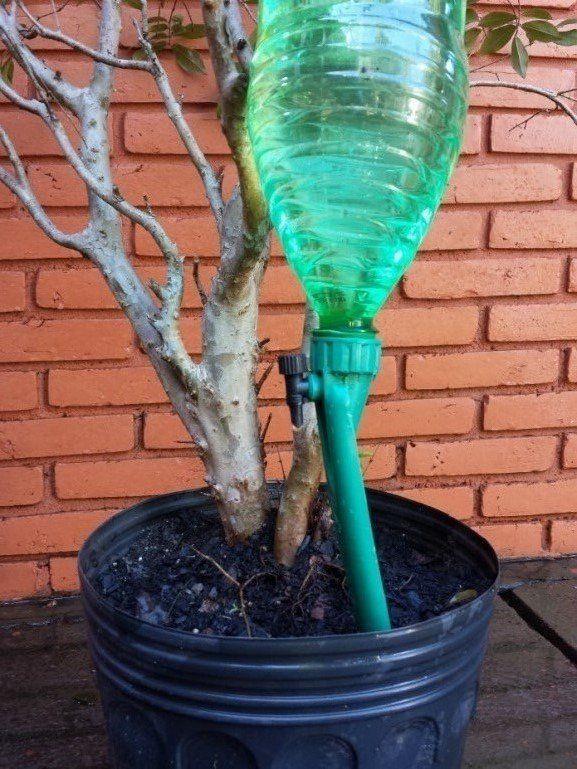 Gotejador para plantas Petgotta irrigação por gotejamento