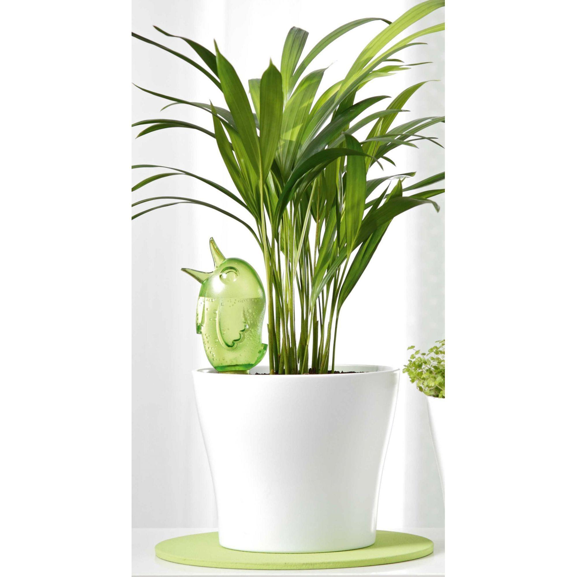 Gotejador para vasos de plantas Bordy Green