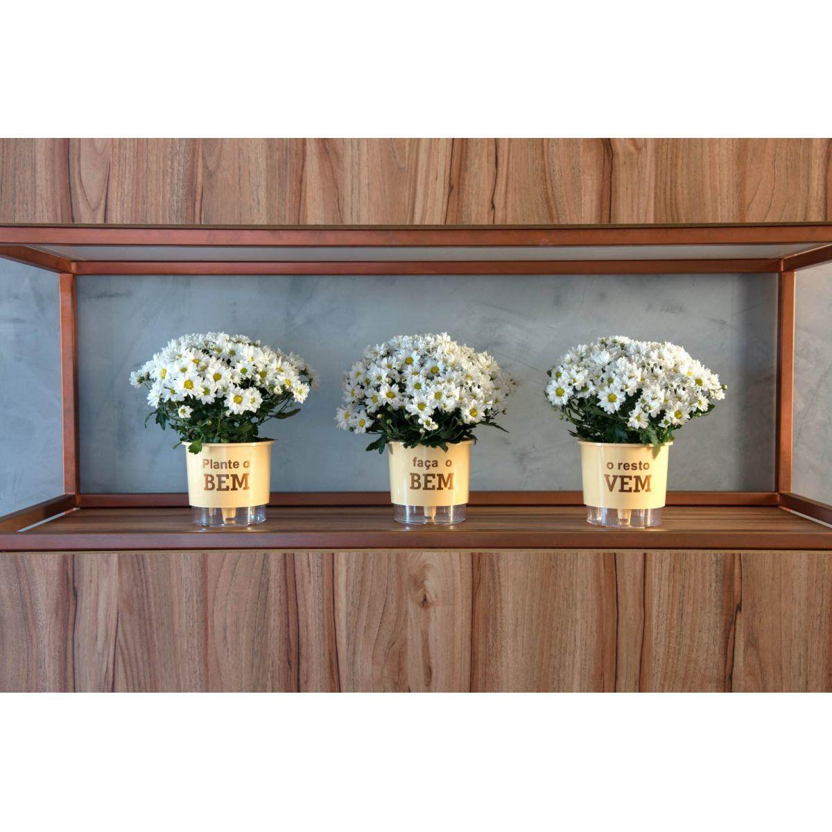 Kit 3 Vasos Autoirrigáveis Pequenos N02 12 cm x 11 cm Plante o Bem Pêssego