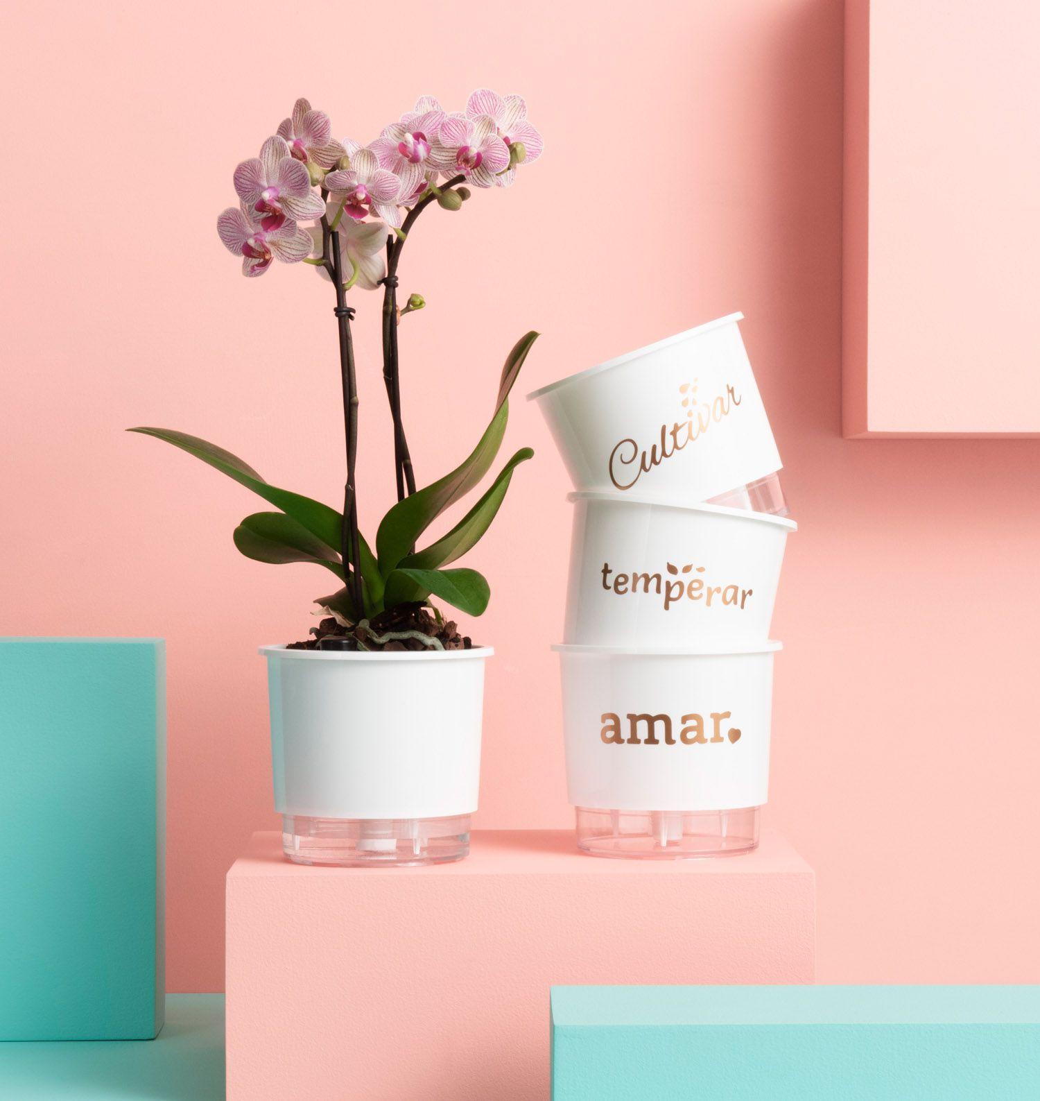 Kit 3 Vasos Autoirrigáveis Pequenos N02 12cm x 11cm Cultivar Temperar e Amar Branco