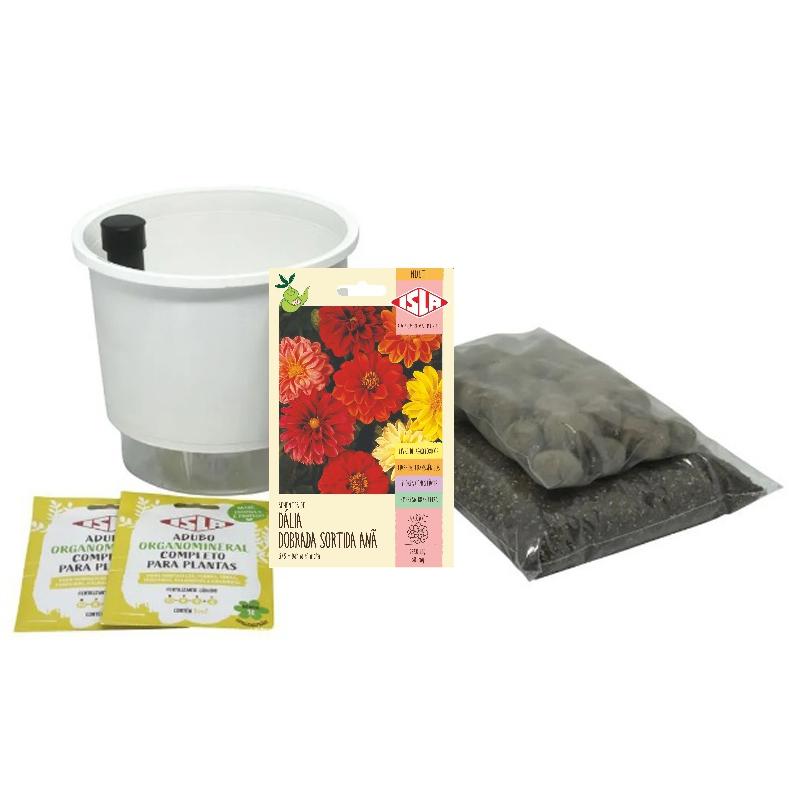 Kit Completo Inicial: Meu Primeiro Plantio de Dália com Vaso Branco + Manual de plantio