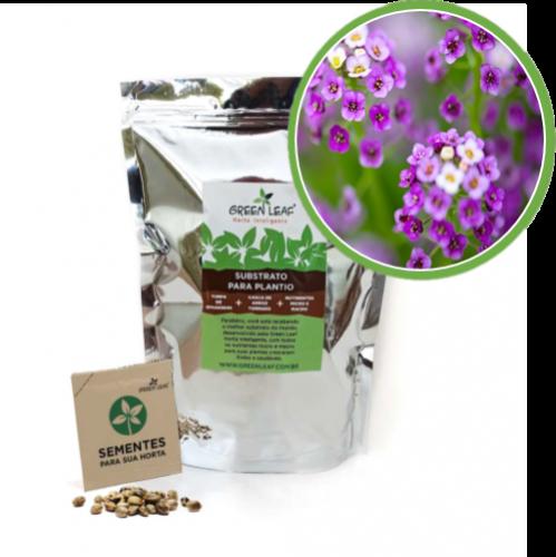 Kit para Plantio de Alyssum Violeta Green Leaf