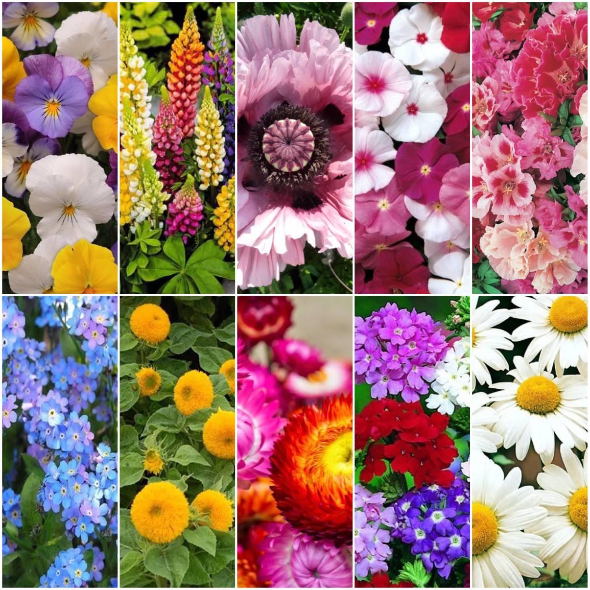 Kit Sementes de Flores 10 variedades Topseed Garden