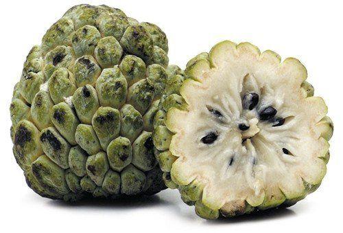 Muda de Fruta do Conde feita de semente