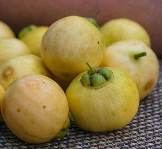 Muda de Jambo Amarelo feita de semente