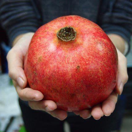 Muda de Romã Gigante feita de semente