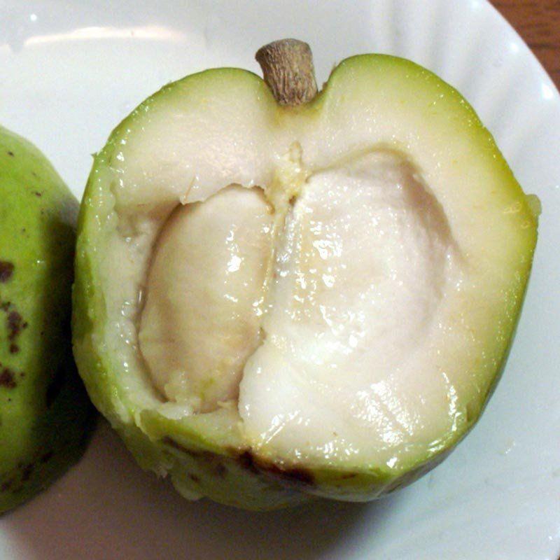 Muda de Sapota Branca feita de semente