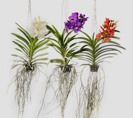 Vaso para orquídeas nº 10 Cesta Vazado Preto 5,5cm x 9,5cm