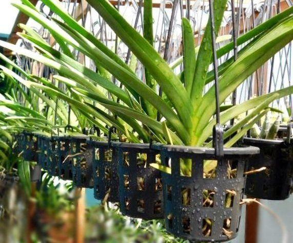 Vaso para orquídeas nº 10 Redondo Vazado Preto 8,5cm x 10cm
