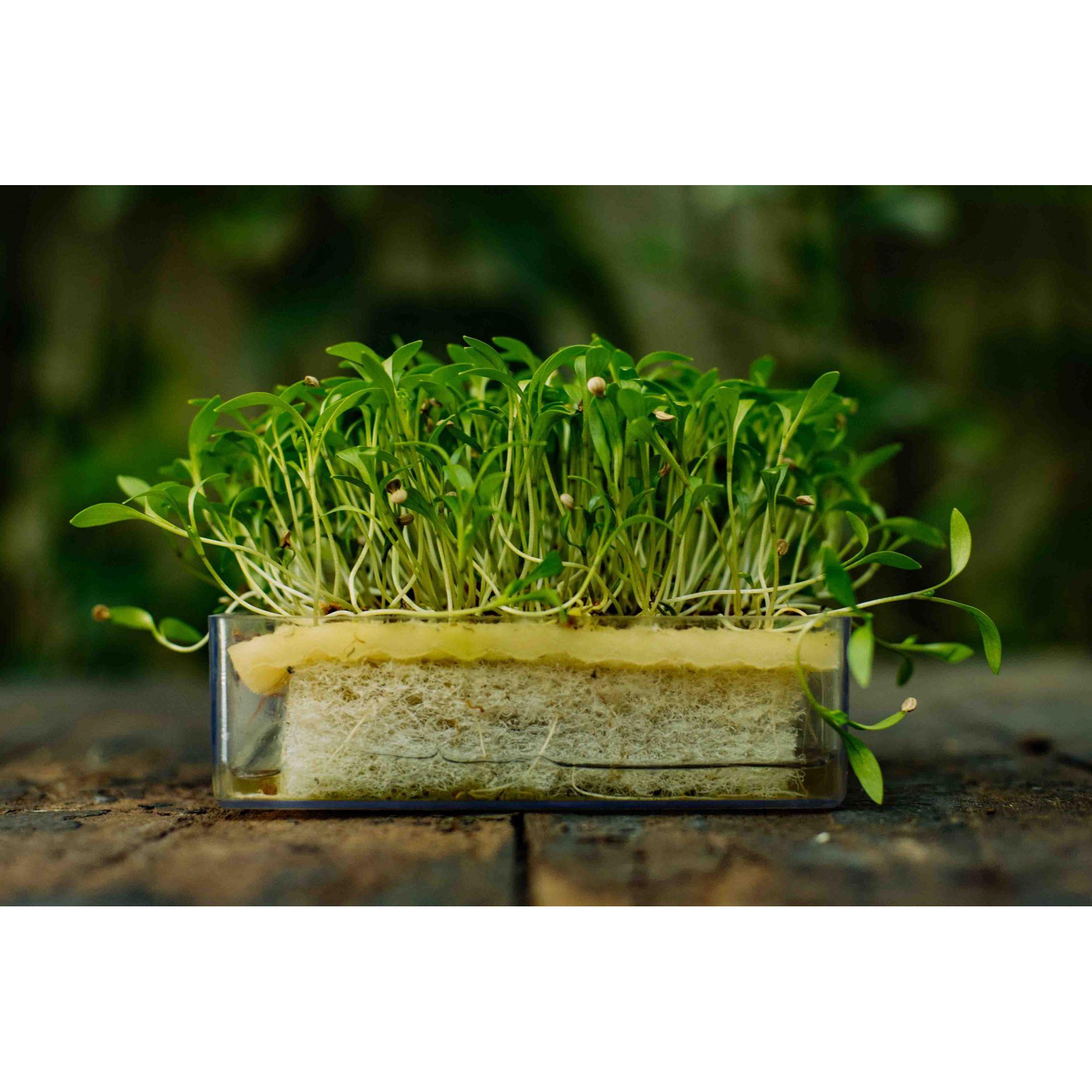 Refil para Kit Brotos Kale