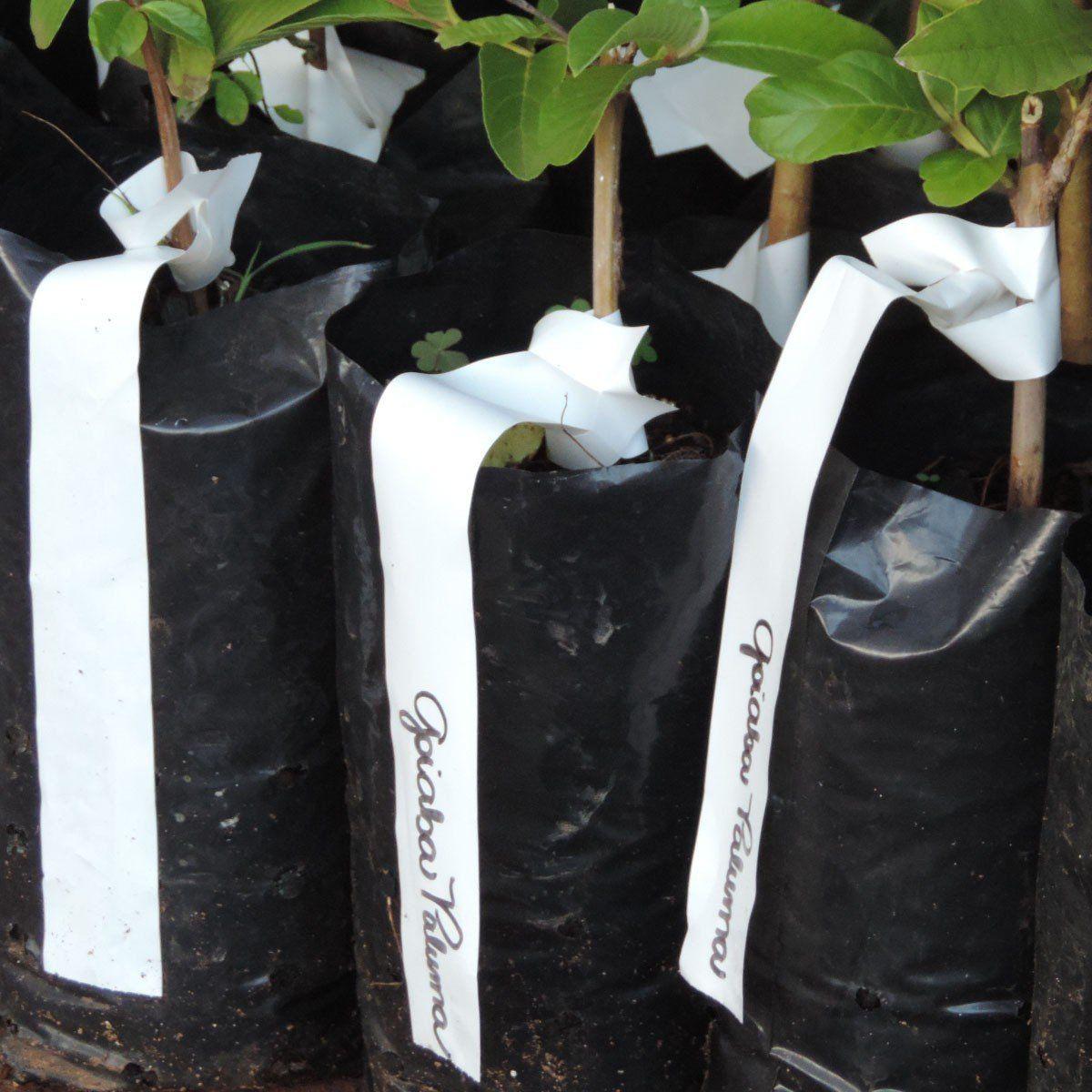 Rolo de etiquetas em polietileno brancas para identificação de plantas 500 etiquetas