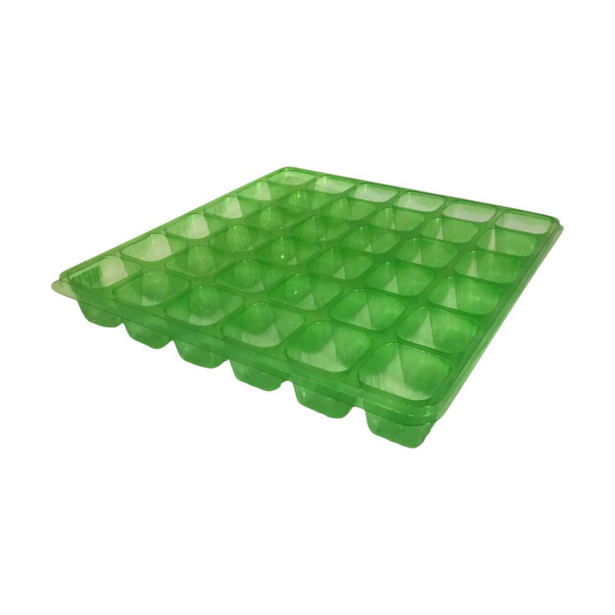 Sementeira com 36 células - Isla