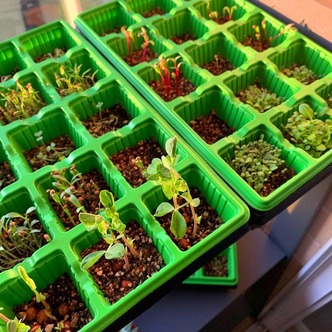 Sementeira Hortinha Caseira com 15 Células Verde - Nutriplan