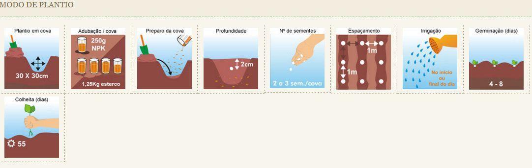 Sementes de Abobora Mini Jack - Envelope 20 sementes - Isla Pro