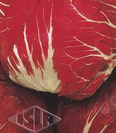Sementes de Almeirão de Cabeça Vermelho 10g - Isla Superpak