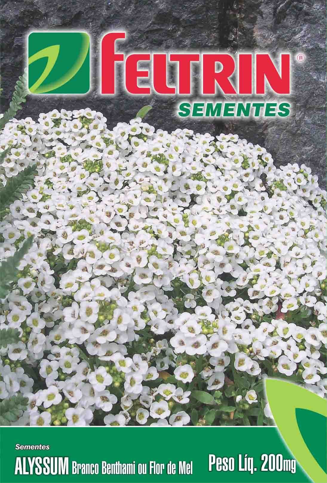 Sementes de Alyssum Branco Benthami Flor de Mel - Feltrin Linha Flores Econômica 200mg