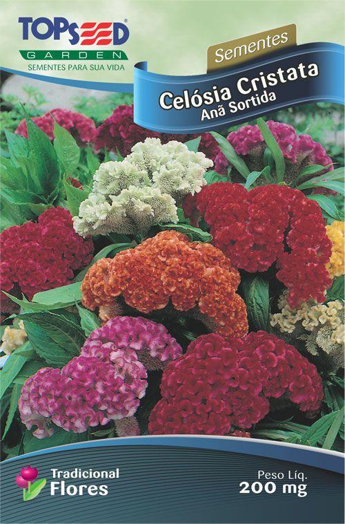 Sementes de Celósia Cristata Anã Sortida 200mg - Topseed Linha Tradicional Flores
