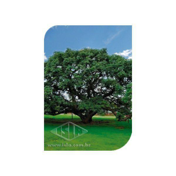 Sementes de Chimbuva Tamboril Timba Uva 10g -  Árvores Nativas Isla Pro
