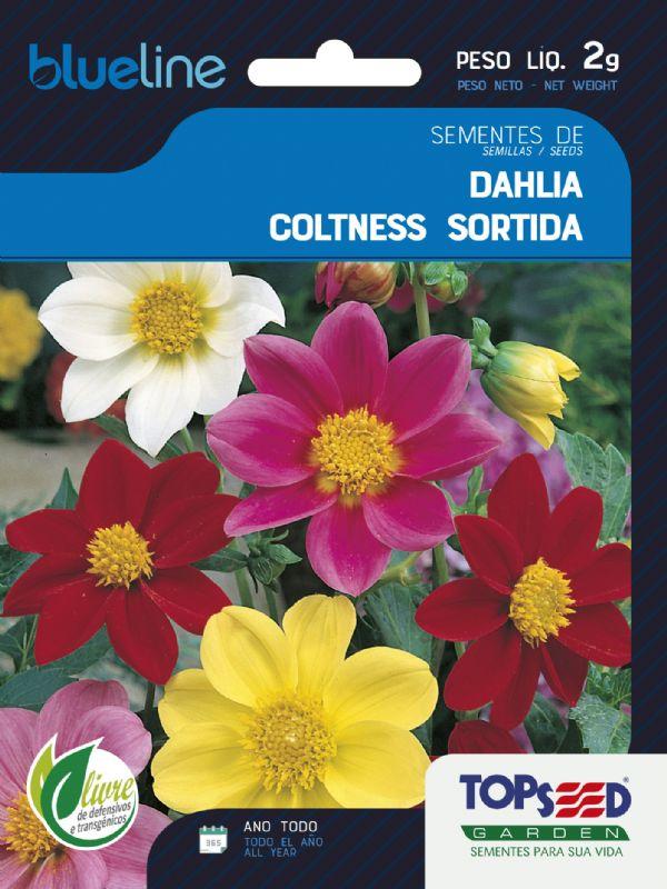 Sementes de Dahlia Coltness Sortida 2g - Topseed Blue Line