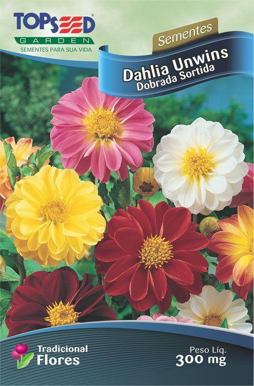 Sementes de Dahlia Unwins Dobrada Sortida 300mg - Topseed Linha Tradicional Flores