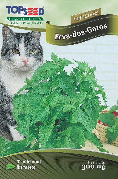 Sementes de Erva dos Gatos - Topseed Linha Tradicional