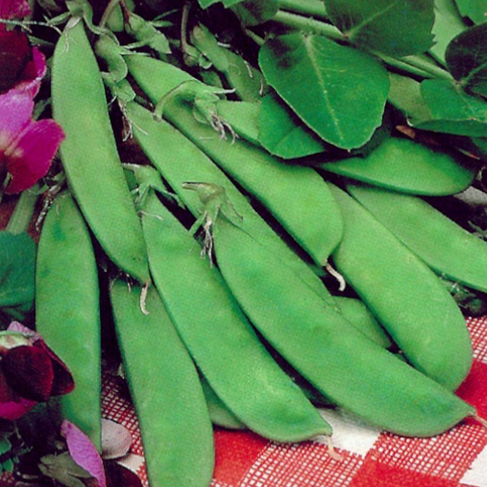 Sementes de Ervilha Torta Flor Roxa 1,5g - TSV Sementes Linha Quintal