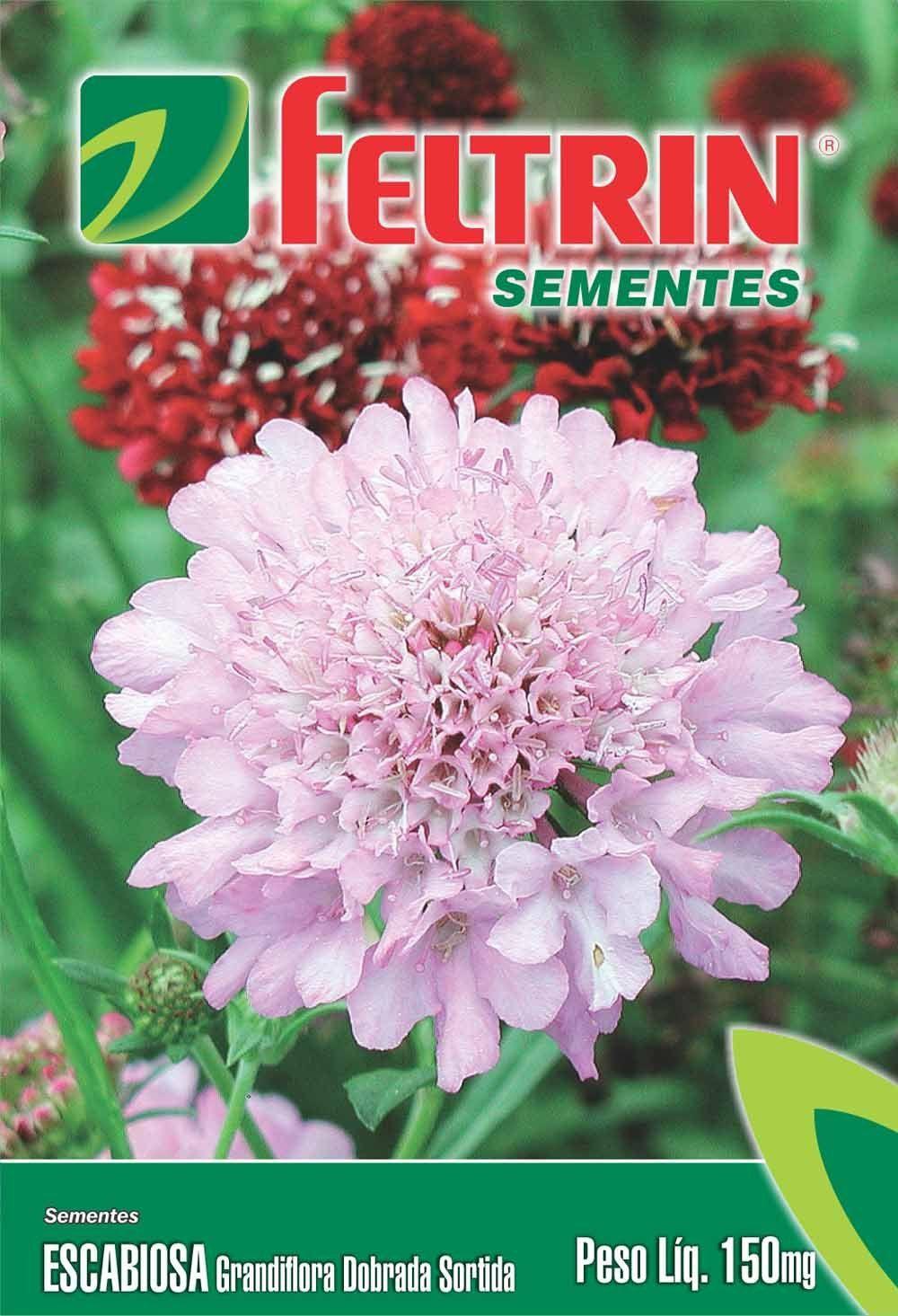Sementes de Escabiosa Grandiflora Dobrada Sortida 150mg - Feltrin Linha Flores